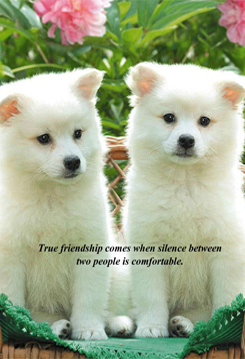 Two White Puppy